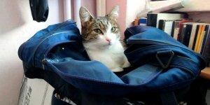 """Kot w torbie """" Lecimy na imprezkę?"""""""