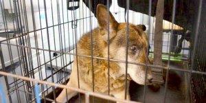 Zorba, pies ze Schroniska na Paluchu