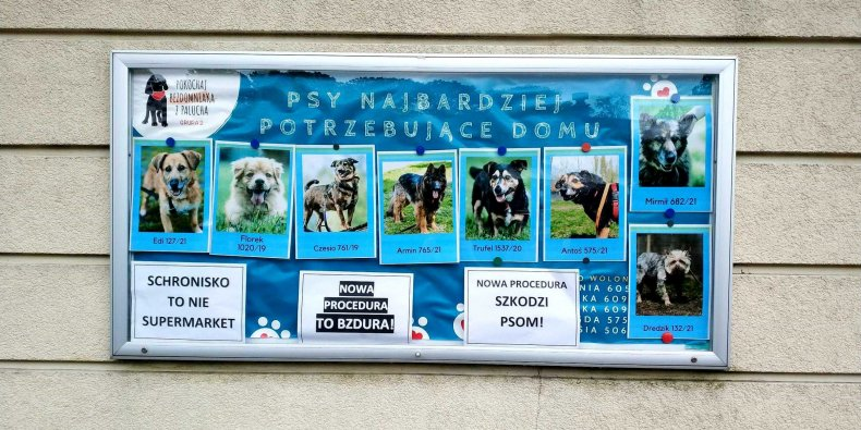 Strajk na Paluchu - oklejona tablica ogłoszeń adopcyjnych w schronisku na Paluchu