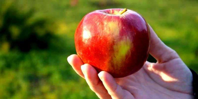 Jabłko na Dzień Jabłek - foto Radomir Tarasov (pexels.com)